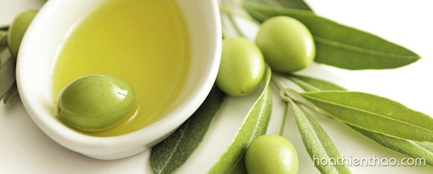Cách chống lão hóa da hiệu quả từ dầu Olive