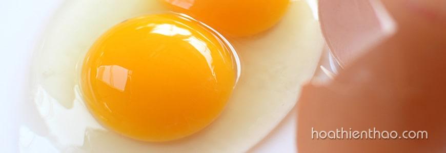 Công dụng giảm cân của trứng