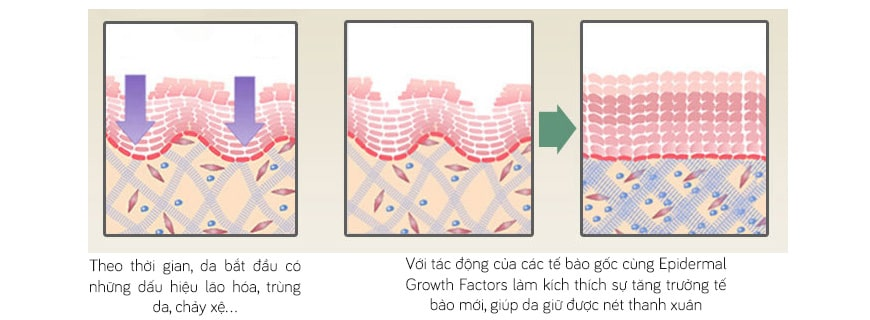 Hiệu quả Mesoestetic Stem Cell Active Growth Factor