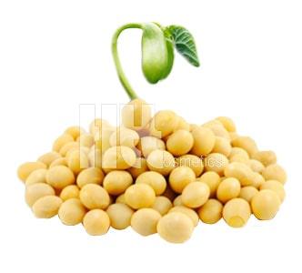Chiết xuất từ mầm đậu nành giúp tăng kích thước vòng 1