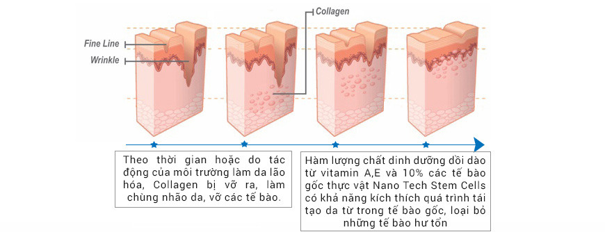 Công dụng Serum Mesoestetic Stem Cell Restructurative