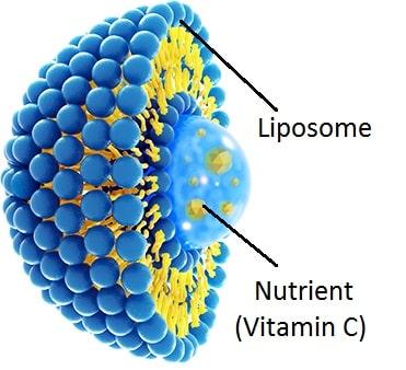 tinh chấtLiposome